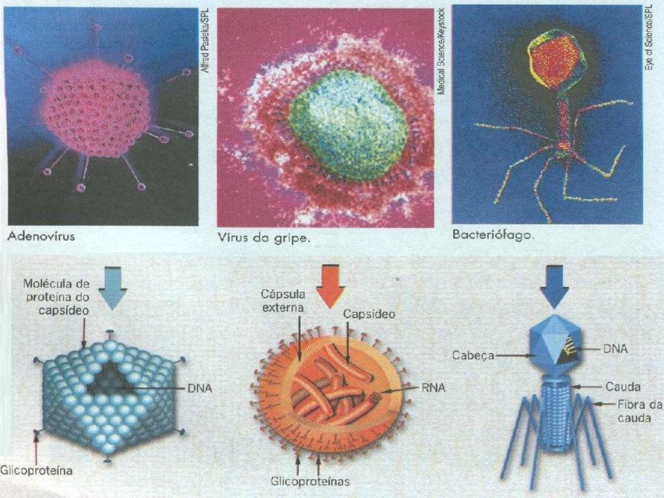 Cada tipo de vírus possui uma forma característica, mas todos eles são extremamente pequenos, geralmente muito menores do que as menores bactérias. Ap