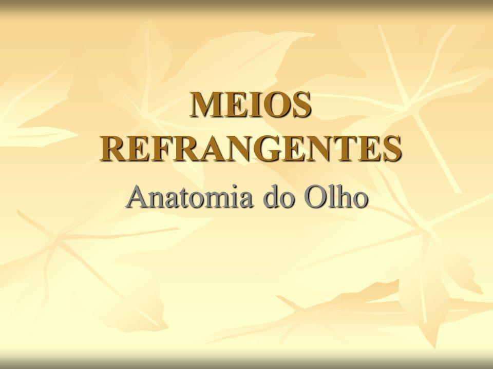MEIOS REFRANGENTES Anatomia do Olho