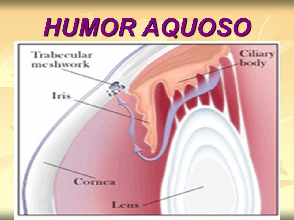 O escoamento do humor aquoso é feito na câmara anterior, aí penetra por uma difusão no canal Schlemm que conduz o humor aquoso ao sistema venoso da coróide; O escoamento do humor aquoso é feito na câmara anterior, aí penetra por uma difusão no canal Schlemm que conduz o humor aquoso ao sistema venoso da coróide; O humor aquoso é um liquido intra-ocular, mantêm uma pressão no globo ocular capaz de mantê-lo distendido; O humor aquoso é um liquido intra-ocular, mantêm uma pressão no globo ocular capaz de mantê-lo distendido; É formado e absorvido continuamente; É formado e absorvido continuamente; A pressão exercida por ele normal é de 17 a 25 mm de mercúrio; A pressão exercida por ele normal é de 17 a 25 mm de mercúrio;