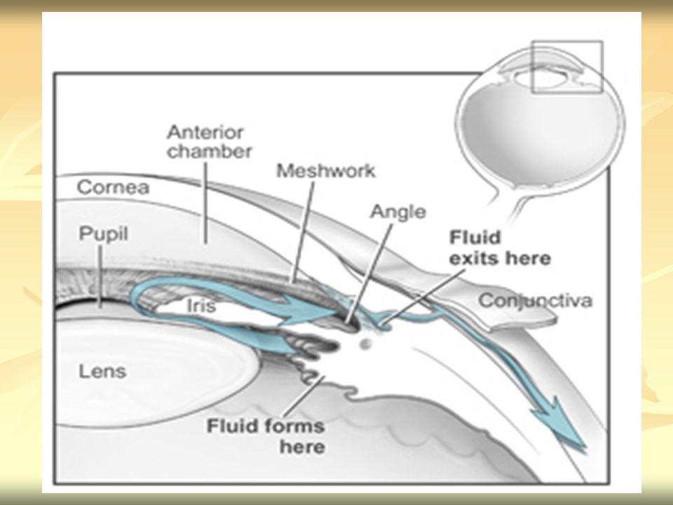 Um problema de drenagem por este canal pode levar a cegueira, pois com o aumento de pressão intra-ocular a irrigação da retina é dificultada o que leva a morte das células sensoriais.