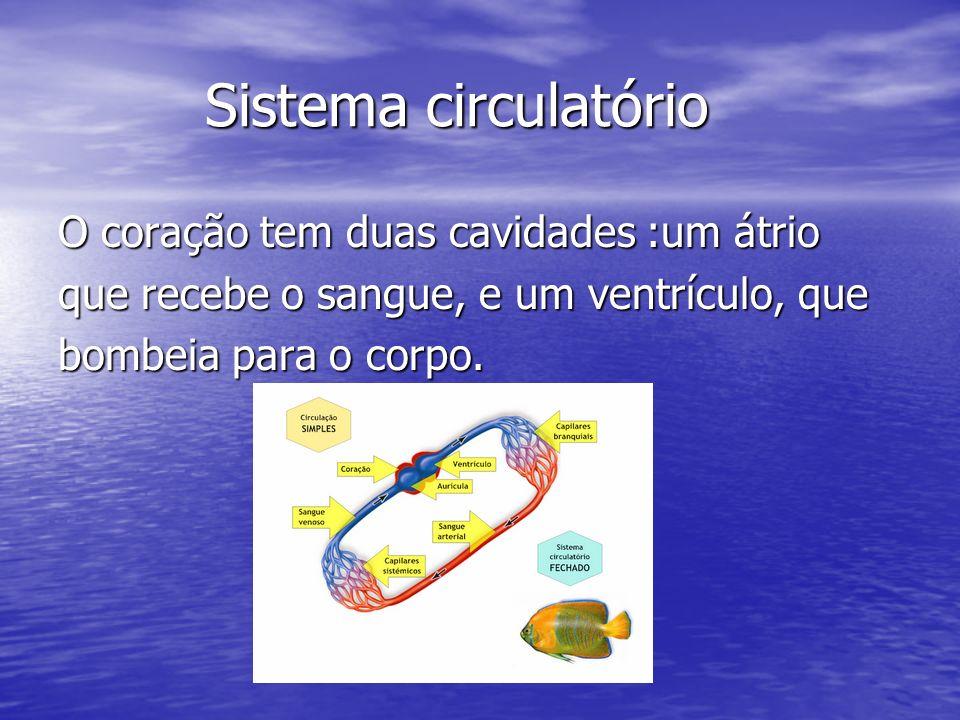 Sistema circulatório Sistema circulatório O coração tem duas cavidades :um átrio que recebe o sangue, e um ventrículo, que bombeia para o corpo.