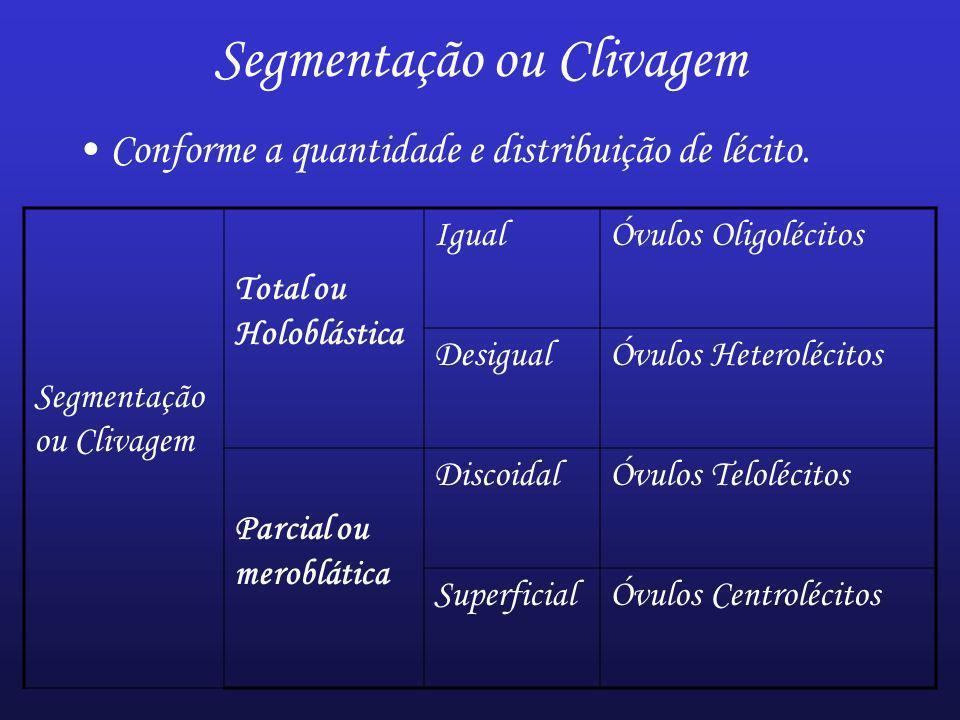 Segmentação ou Clivagem Conforme a quantidade e distribuição de lécito. Segmentação ou Clivagem Total ou Holoblástica IgualÓvulos Oligolécitos Desigua