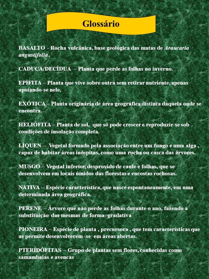Glossário BASALTO - Rocha vulcânica, base geológica das matas de Araucaria angustifolia. CADUCA/DECÌDUA – Planta que perde as folhas no inverno. EPÍFI