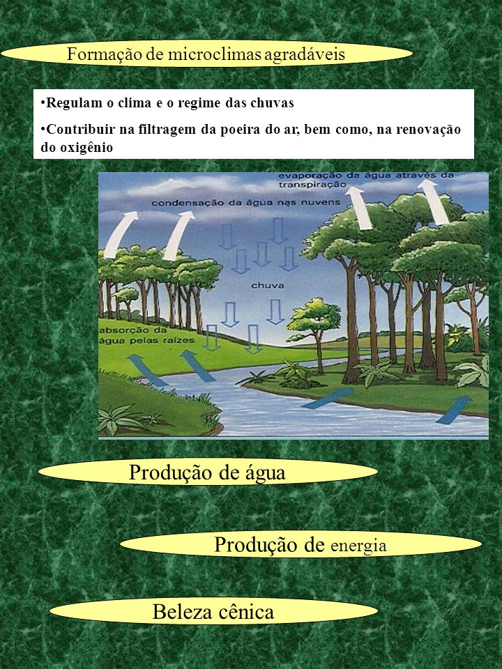 Produção de energia Produção de água Beleza cênica Regulam o clima e o regime das chuvas Contribuir na filtragem da poeira do ar, bem como, na renovaç