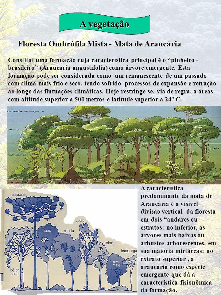 A vegetação Floresta Ombrófila Mista - Mata de Araucária Constitui uma formação cuja característica principal é o pinheiro - brasileiro (Araucaria ang