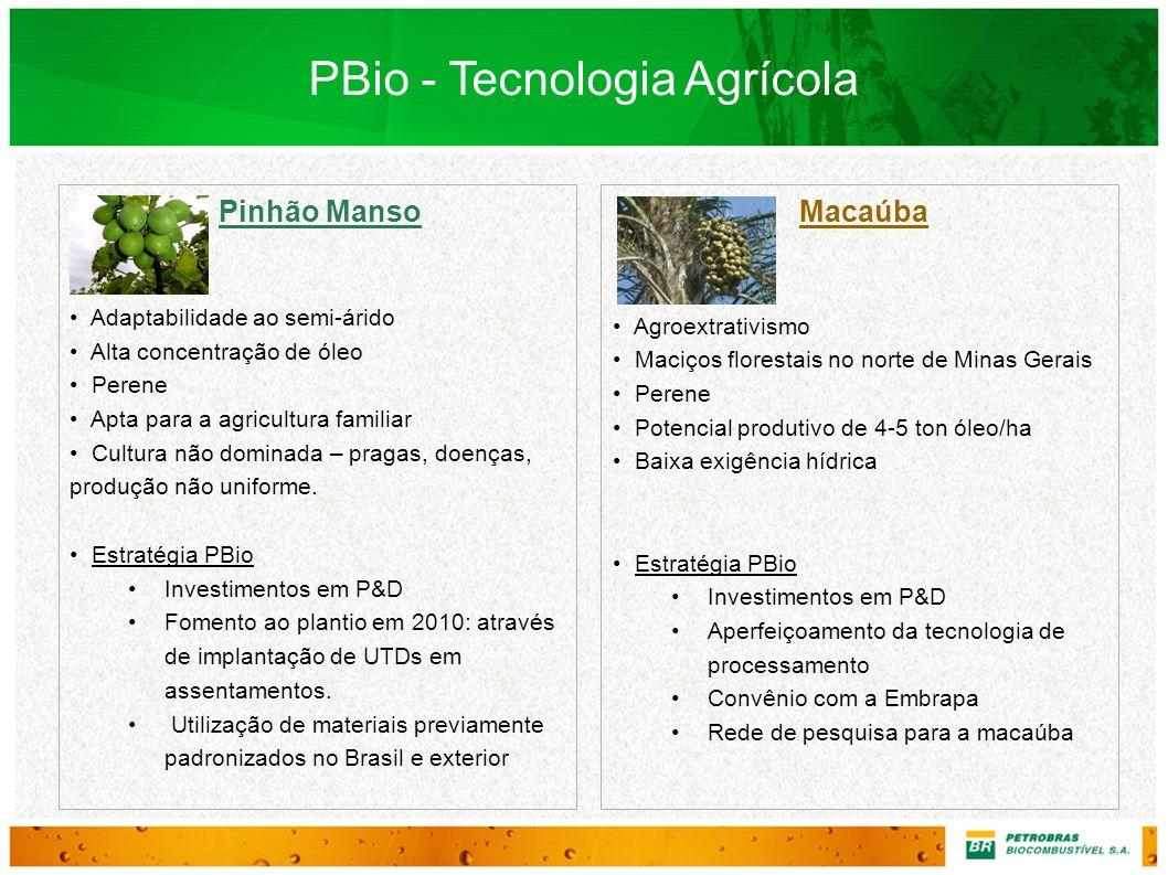 19 Pinhão Manso Adaptabilidade ao semi-árido Alta concentração de óleo Perene Apta para a agricultura familiar Cultura não dominada – pragas, doenças,