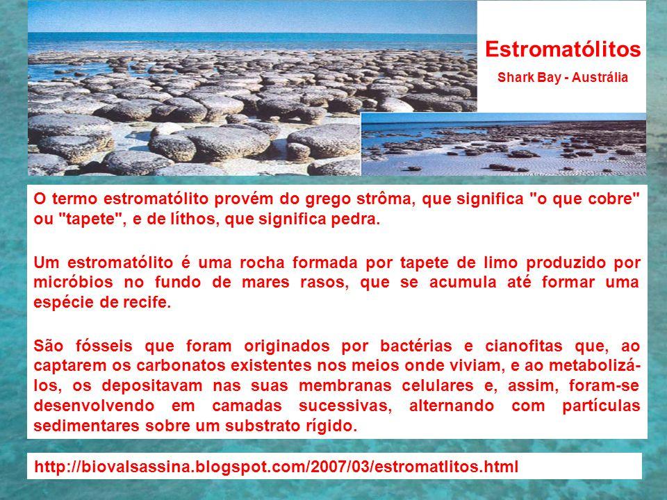 Estromatólitos Shark Bay - Austrália O termo estromatólito provém do grego strôma, que significa