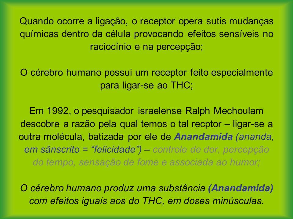 Quando ocorre a ligação, o receptor opera sutis mudanças químicas dentro da célula provocando efeitos sensíveis no raciocínio e na percepção; O cérebro humano possui um receptor feito especialmente para ligar-se ao THC; Em 1992, o pesquisador israelense Ralph Mechoulam descobre a razão pela qual temos o tal recptor – ligar-se a outra molécula, batizada por ele de Anandamida (ananda, em sânscrito = felicidade) – controle de dor, percepção do tempo, sensação de fome e associada ao humor; O cérebro humano produz uma substância (Anandamida) com efeitos iguais aos do THC, em doses minúsculas.