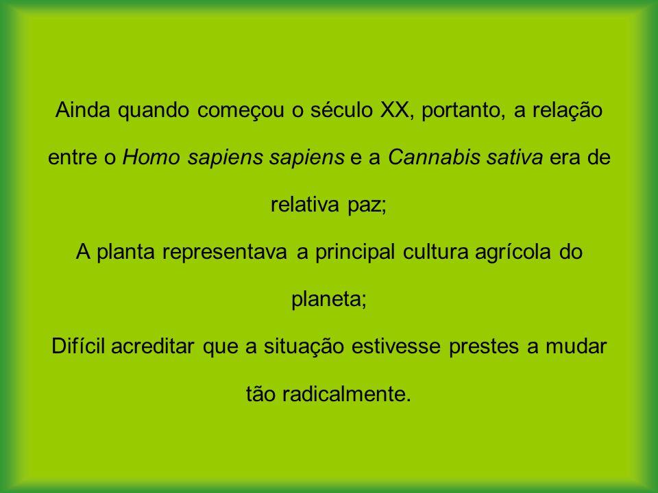 Ainda quando começou o século XX, portanto, a relação entre o Homo sapiens sapiens e a Cannabis sativa era de relativa paz; A planta representava a pr