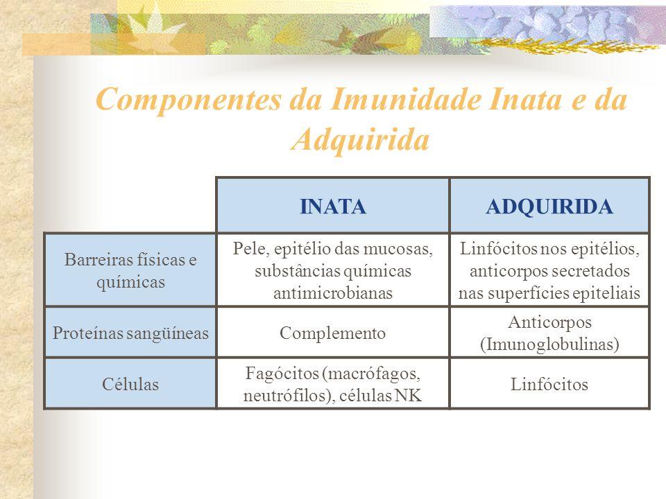 Componentes da Imunidade Inata e da Adquirida INATAADQUIRIDA Barreiras físicas e químicas Pele, epitélio das mucosas, substâncias químicas antimicrobi