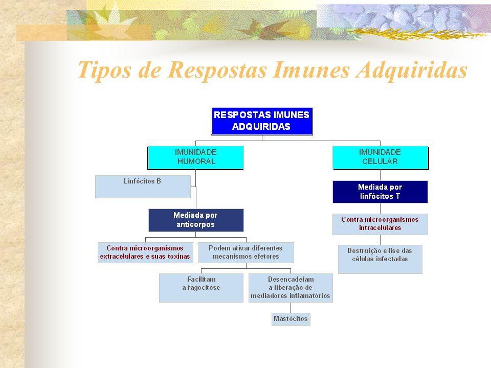 Tipos de Respostas Imunes Adquiridas
