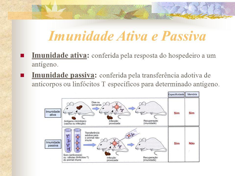 Imunidade Ativa e Passiva Imunidade ativa: conferida pela resposta do hospedeiro a um antígeno. Imunidade passiva: conferida pela transferência adotiv