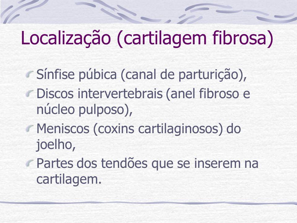 Localização (cartilagem fibrosa) Sínfise púbica (canal de parturição), Discos intervertebrais (anel fibroso e núcleo pulposo), Meniscos (coxins cartil