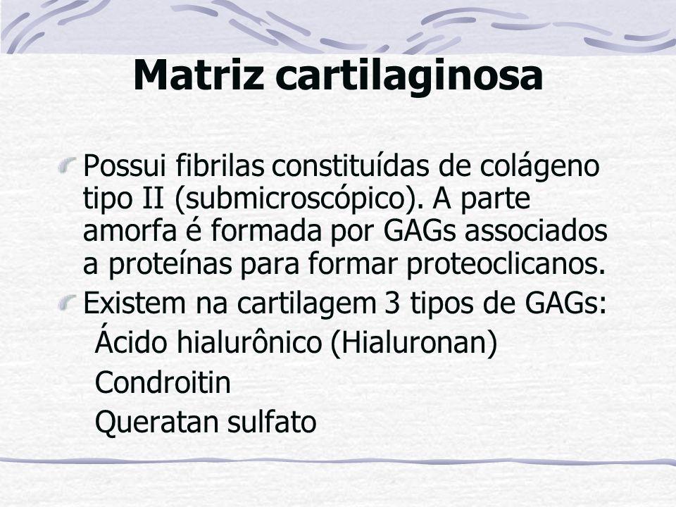 Matriz cartilaginosa Possui fibrilas constituídas de colágeno tipo II (submicroscópico). A parte amorfa é formada por GAGs associados a proteínas para
