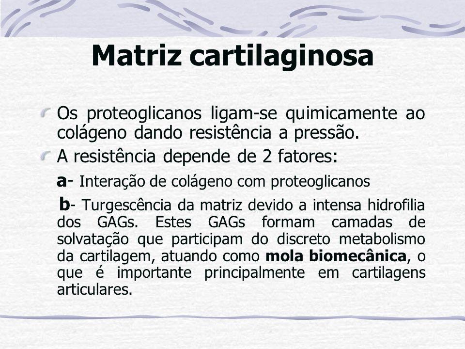 Matriz cartilaginosa Os proteoglicanos ligam-se quimicamente ao colágeno dando resistência a pressão. A resistência depende de 2 fatores: a- Interação