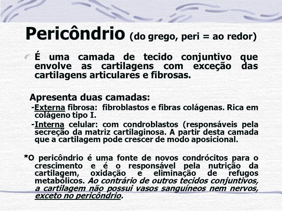 Pericôndrio (do grego, peri = ao redor) É uma camada de tecido conjuntivo que envolve as cartilagens com exceção das cartilagens articulares e fibrosa
