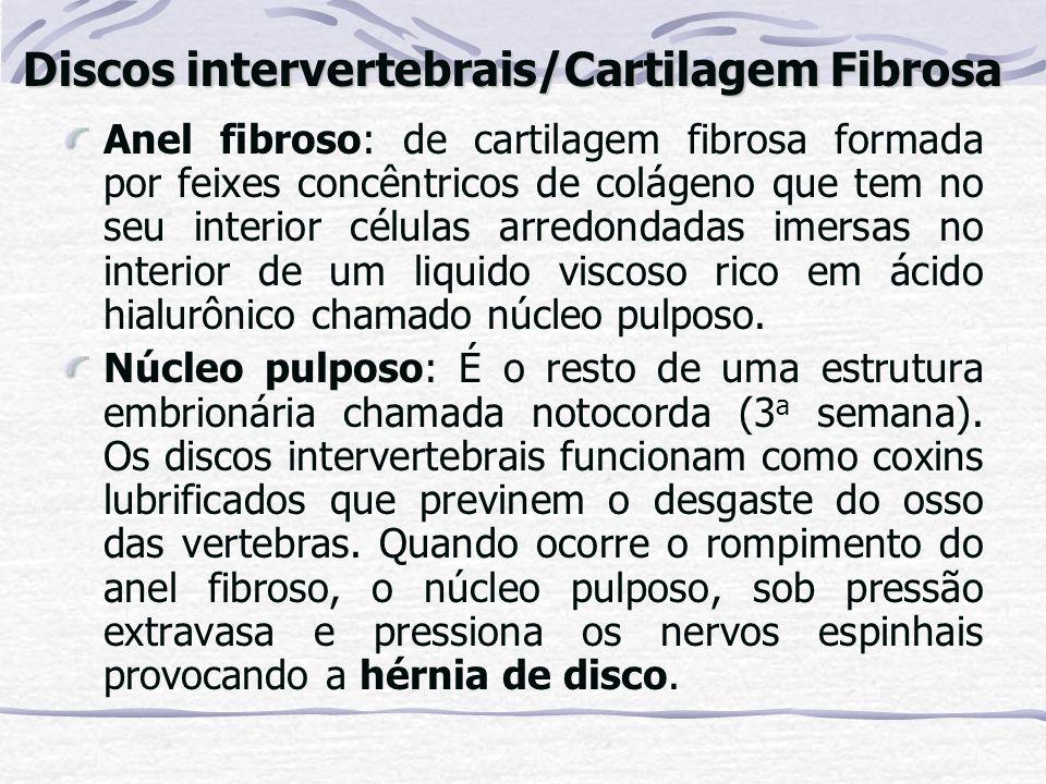 Anel fibroso: de cartilagem fibrosa formada por feixes concêntricos de colágeno que tem no seu interior células arredondadas imersas no interior de um