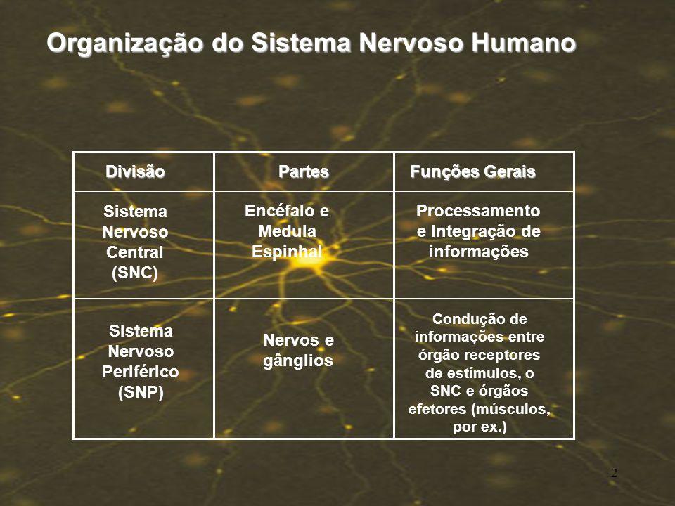 SISTEMA NERVOSO Células do Tecido Nervoso Células do Tecido Nervoso Morfologia do Neurônio Morfologia do Neurônio Impulso Nervoso Impulso Nervoso Sina
