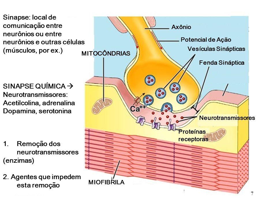 CONDUÇÃO SALTATÓRIA Potencial de Ação Condução saltatória Mielina Axônio 6
