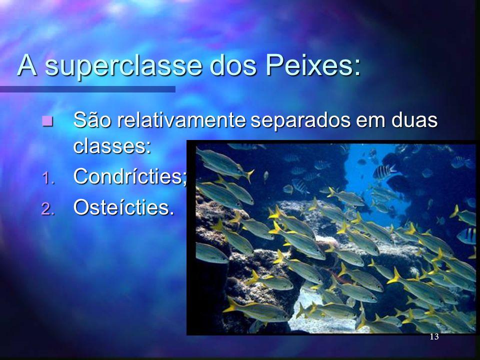 A superclasse dos Peixes: São relativamente separados em duas classes: São relativamente separados em duas classes: 1. Condrícties; 2. Osteícties. 13