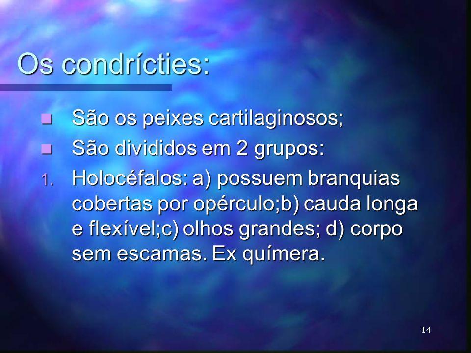 Os condrícties: São os peixes cartilaginosos; São os peixes cartilaginosos; São divididos em 2 grupos: São divididos em 2 grupos: 1. Holocéfalos: a) p