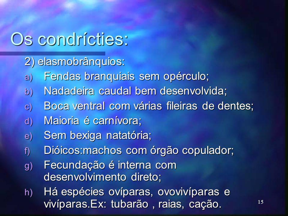 Os condrícties: 2) elasmobrânquios: a) Fendas branquiais sem opérculo; b) Nadadeira caudal bem desenvolvida; c) Boca ventral com várias fileiras de de