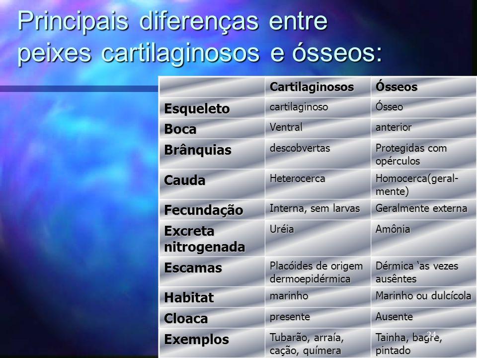 Principais diferenças entre peixes cartilaginosos e ósseos: CartilaginososÓsseos EsqueletocartilaginosoÓsseo BocaVentralanterior Brânquiasdescobvertas