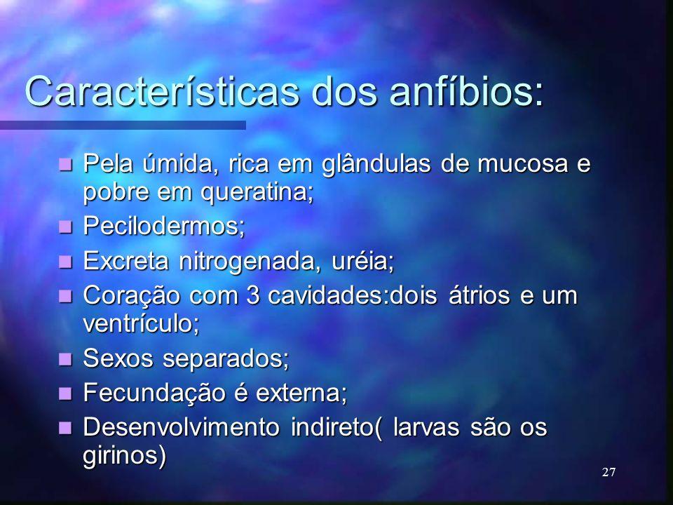 Características dos anfíbios: Pela úmida, rica em glândulas de mucosa e pobre em queratina; Pela úmida, rica em glândulas de mucosa e pobre em querati