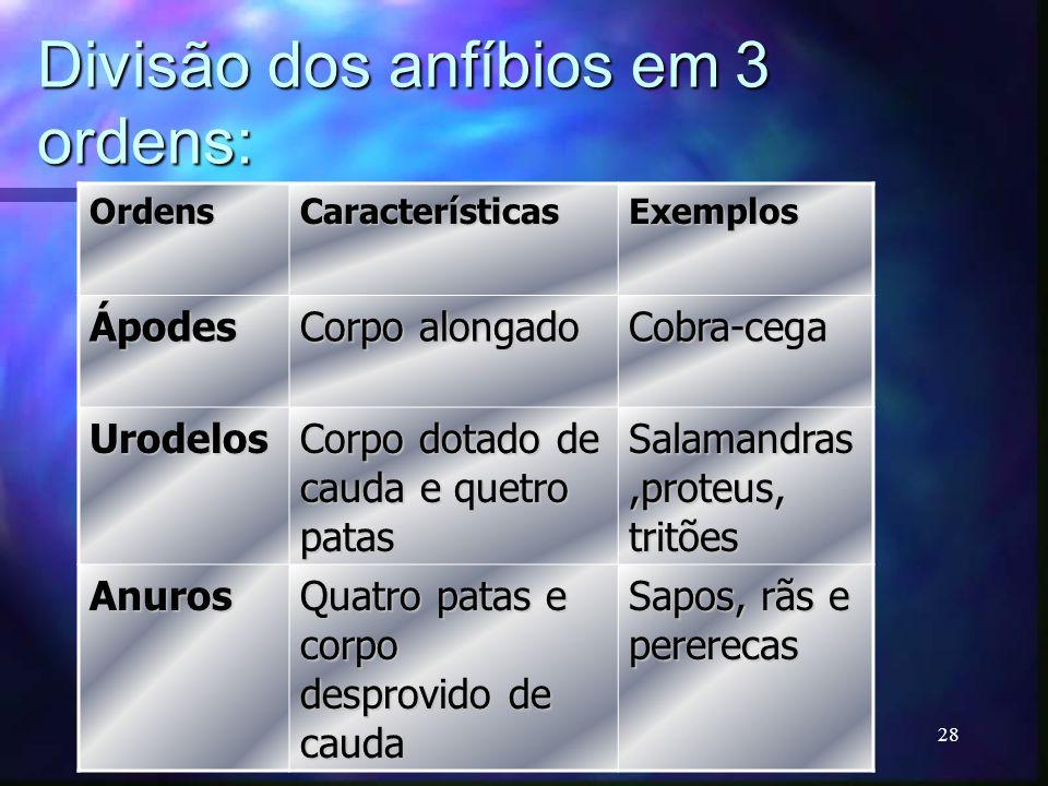 Divisão dos anfíbios em 3 ordens: OrdensCaracterísticasExemplos Ápodes Corpo alongado Cobra-cega Urodelos Corpo dotado de cauda e quetro patas Salaman