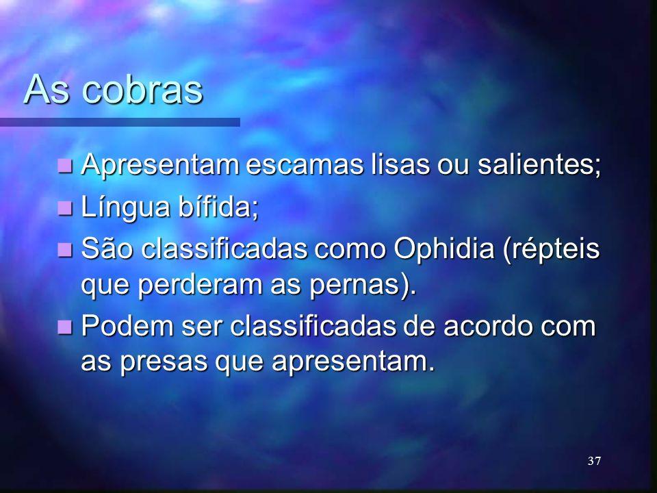 As cobras Apresentam escamas lisas ou salientes; Apresentam escamas lisas ou salientes; Língua bífida; Língua bífida; São classificadas como Ophidia (