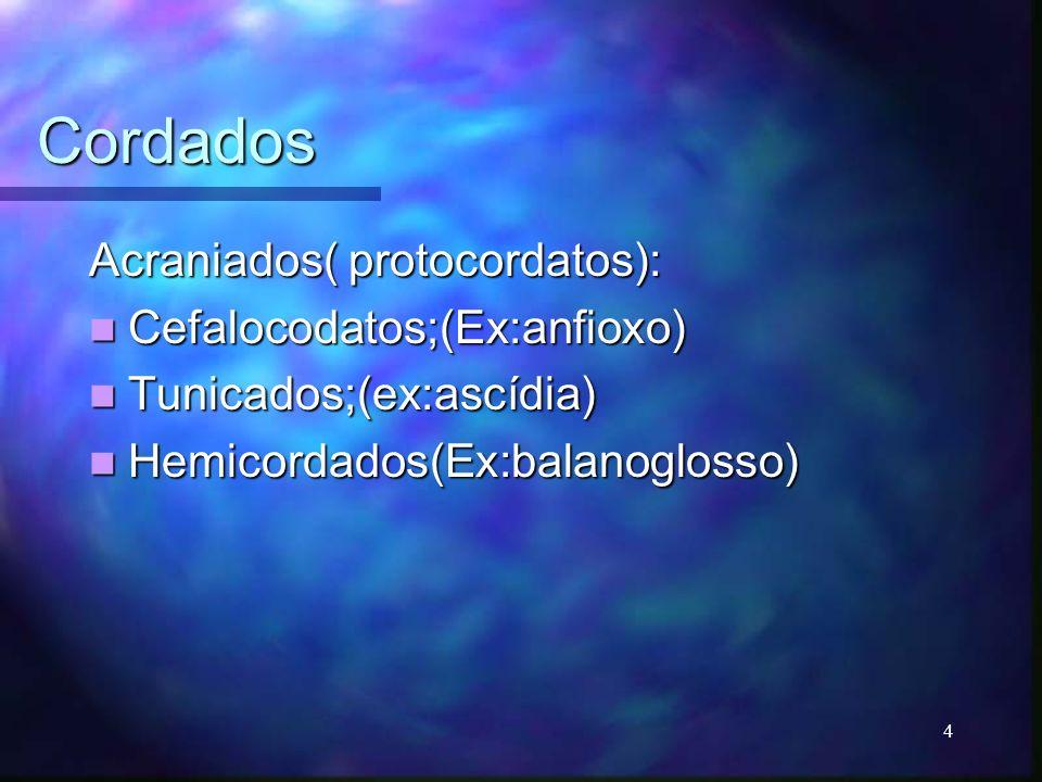 Cordados Acraniados( protocordatos): Cefalocodatos;(Ex:anfioxo) Cefalocodatos;(Ex:anfioxo) Tunicados;(ex:ascídia) Tunicados;(ex:ascídia) Hemicordados(