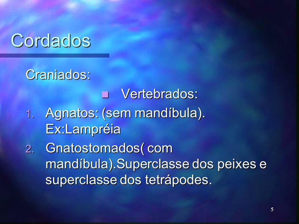Cordados ( gnatostomados) Superclasse dos peixes: Superclasse dos peixes: 1.