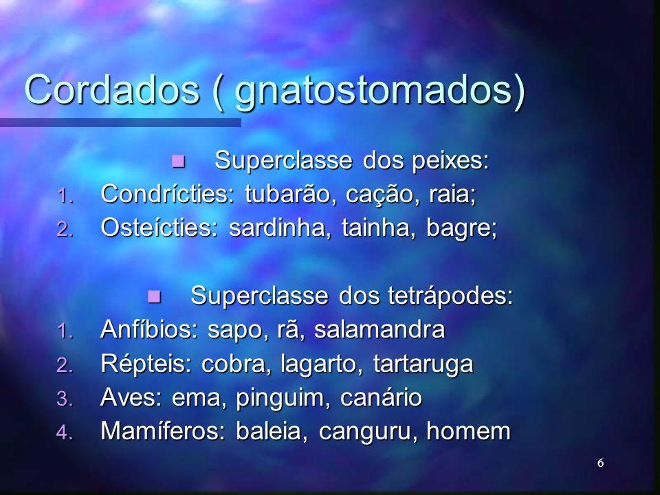 Cordados ( gnatostomados) Superclasse dos peixes: Superclasse dos peixes: 1. Condrícties: tubarão, cação, raia; 2. Osteícties: sardinha, tainha, bagre