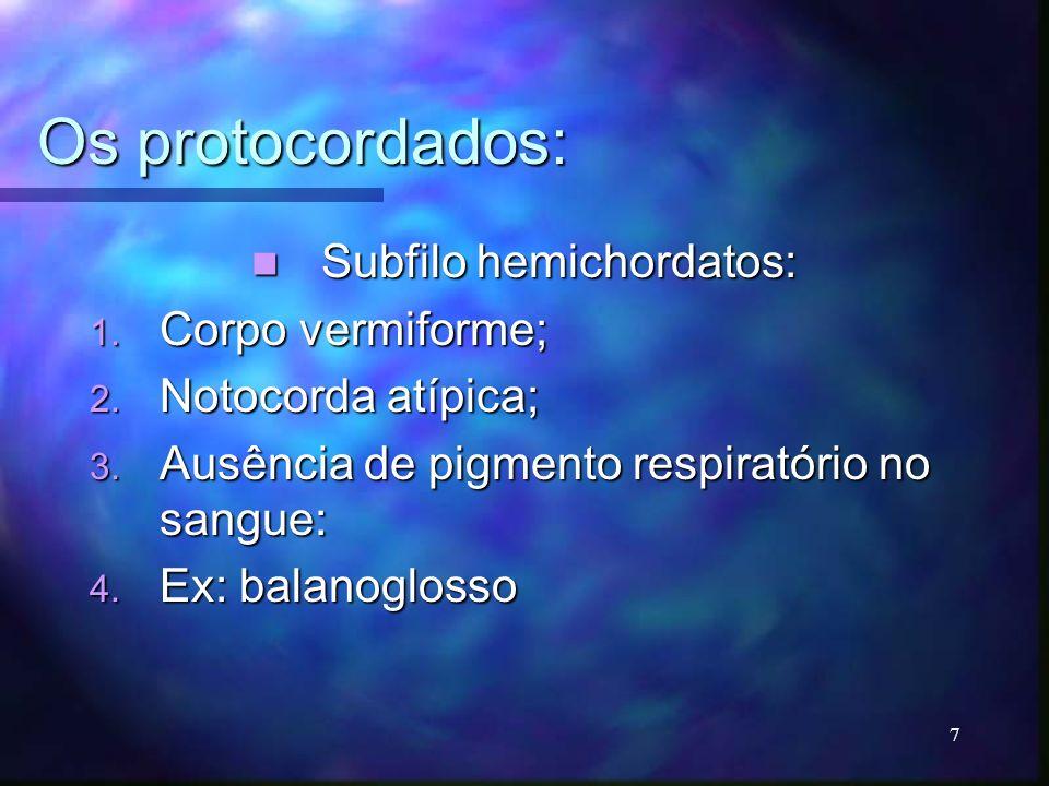 Os protocordados: Subfilo hemichordatos: Subfilo hemichordatos: 1. Corpo vermiforme; 2. Notocorda atípica; 3. Ausência de pigmento respiratório no san