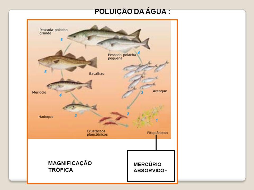 POLUIÇÃO DA ÁGUA : MERCÚRIO ABSORVIDO - MAGNIFICAÇÃO TRÓFICA