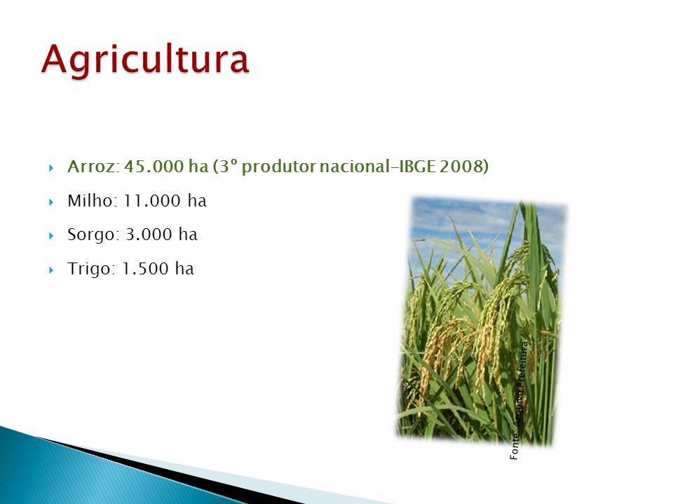 Arroz: 45.000 ha (3º produtor nacional-IBGE 2008) Milho: 11.000 ha Sorgo: 3.000 ha Trigo: 1.500 ha Fonte: Arquivo Prefeitura