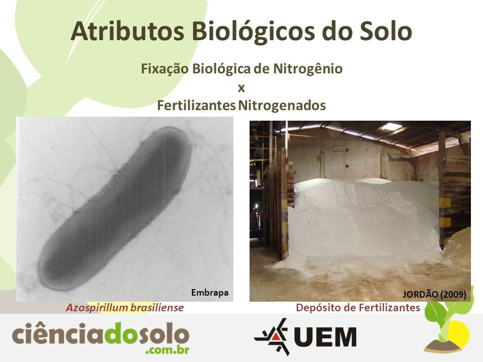 Atributos Biológicos do Solo Fixação Biológica de Nitrogênio x Fertilizantes Nitrogenados Azospirillum brasilienseDepósito de Fertilizantes Embrapa JO