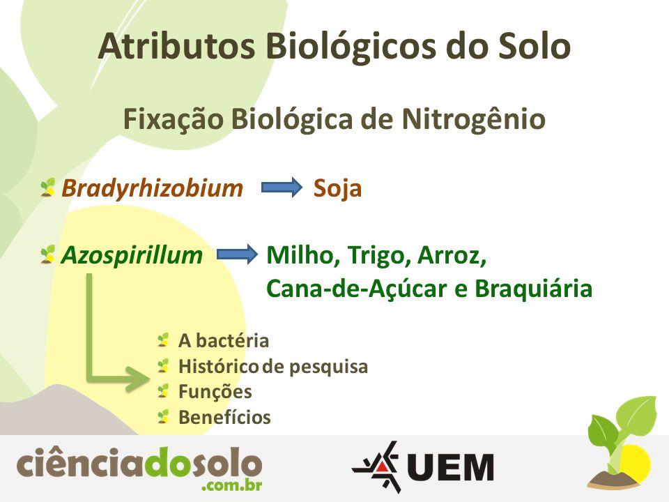 Fixação Biológica de Nitrogênio Atributos Biológicos do Solo Bradyrhizobium Soja Azospirillum Milho, Trigo, Arroz, Cana-de-Açúcar e Braquiária A bacté
