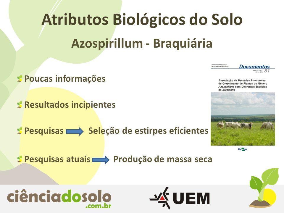 Azospirillum - Braquiária Atributos Biológicos do Solo Poucas informações Resultados incipientes Pesquisas Seleção de estirpes eficientes Pesquisas at
