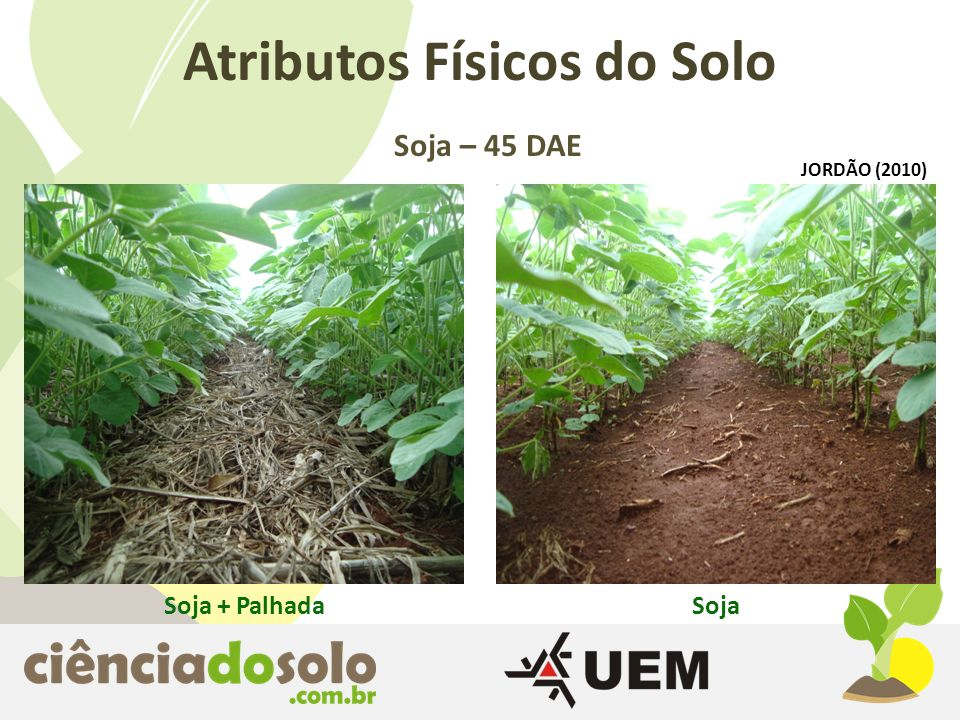 Soja + PalhadaSoja Atributos Físicos do Solo Soja – 45 DAE JORDÃO (2010)