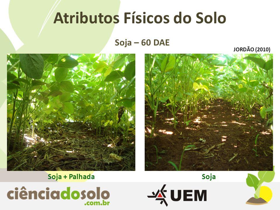 Soja + PalhadaSoja Atributos Físicos do Solo Soja – 60 DAE JORDÃO (2010)