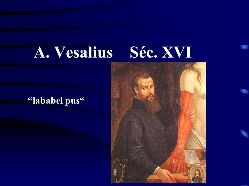 A. Vesalius Séc. XVI lababel pus