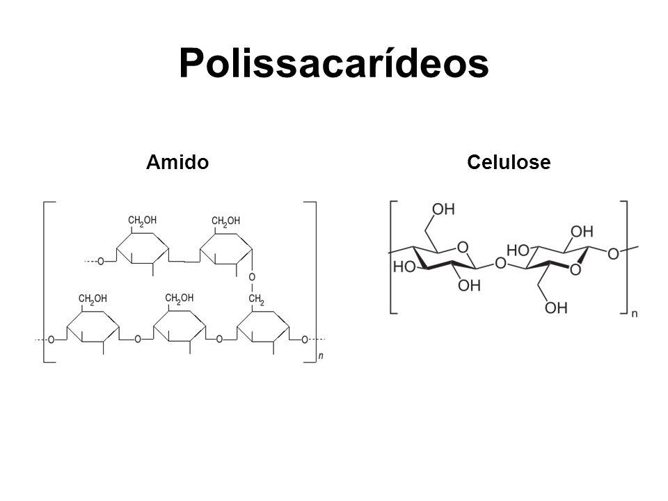 AmidoCelulose
