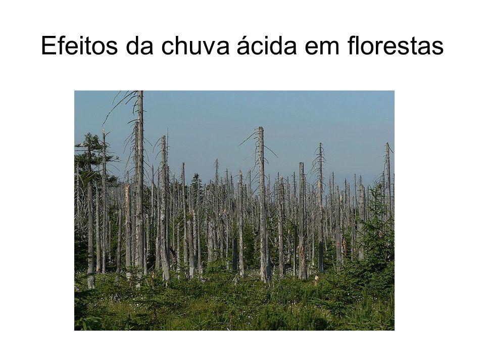 Efeitos da chuva ácida em florestas