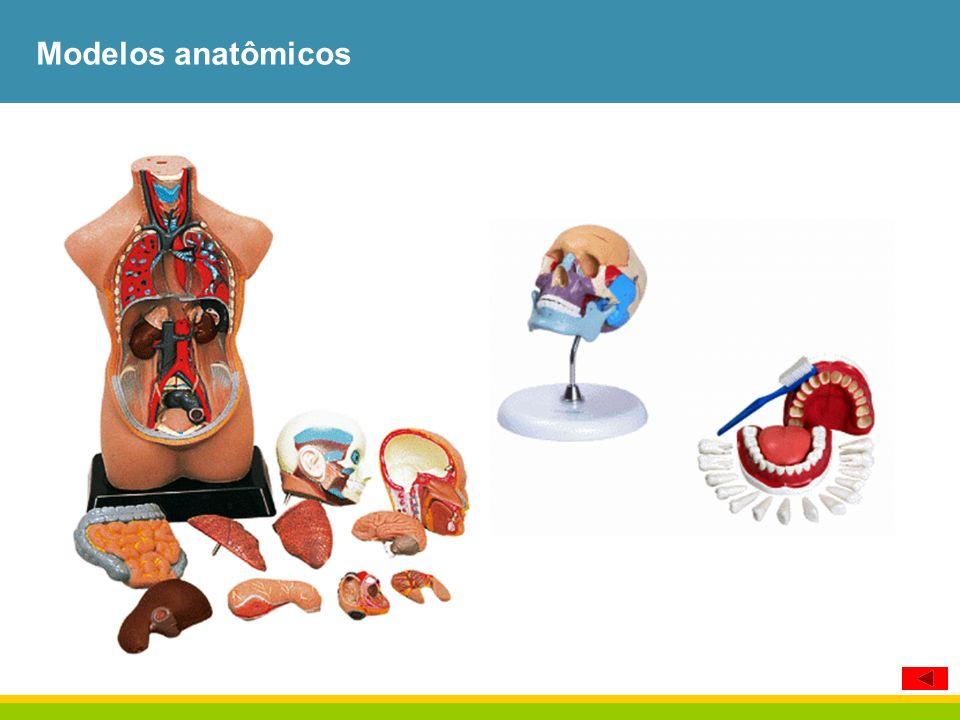 Modelos anatômicos