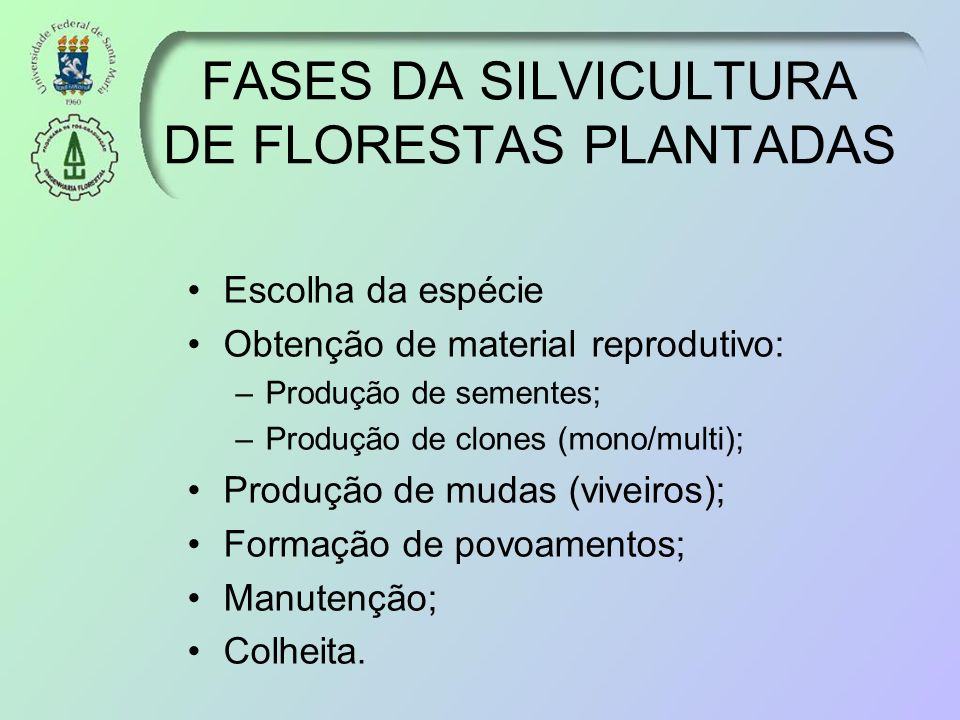 FASES DA SILVICULTURA DE FLORESTAS PLANTADAS Escolha da espécie Obtenção de material reprodutivo: –Produção de sementes; –Produção de clones (mono/mul