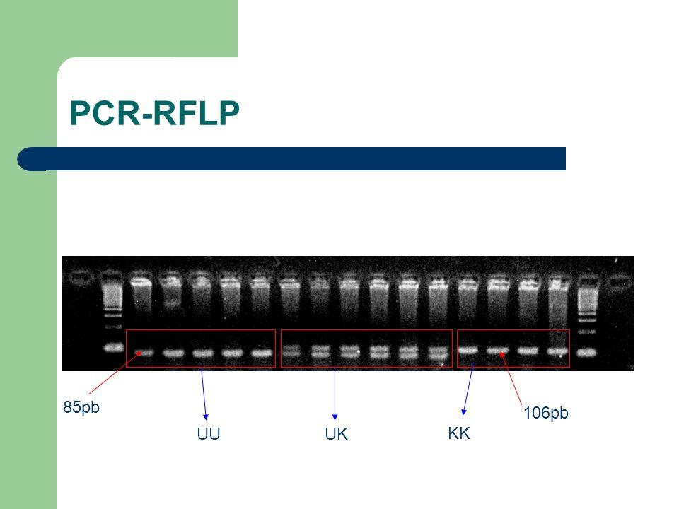 PCR-RFLP 85pb 106pb UUUK KK