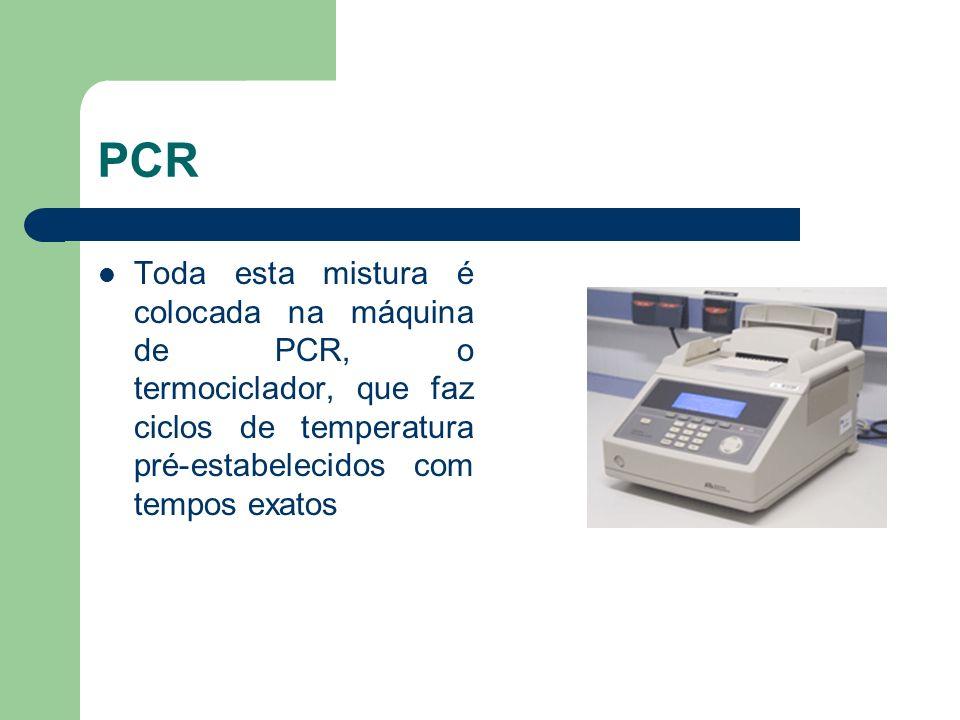 PCR Toda esta mistura é colocada na máquina de PCR, o termociclador, que faz ciclos de temperatura pré-estabelecidos com tempos exatos