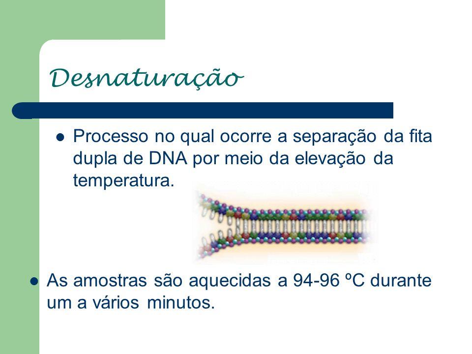 Desnaturação Processo no qual ocorre a separação da fita dupla de DNA por meio da elevação da temperatura. As amostras são aquecidas a 94-96 ºC durant