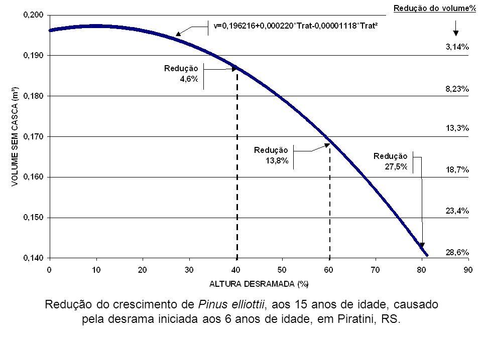 Redução do crescimento de Pinus elliottii, aos 15 anos de idade, causado pela desrama iniciada aos 6 anos de idade, em Piratini, RS.